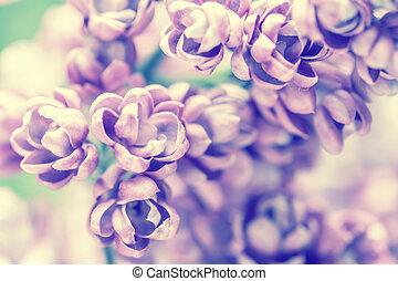 vindima, flores, lilás