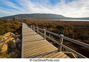Wooden boardwalk at Pine Lake along Tasmanian ancient trees,...