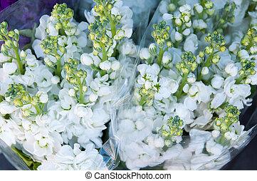 white Gillyflower flowers bouquete - white nice Gillyflower...