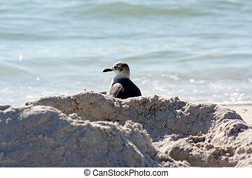 Seagull Behind Sand
