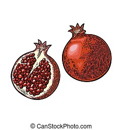 Whole and half garnet fruit with seed. Vector engraving -...