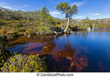 Wombat Pool, Cradle mountain - Ripples on dark water surface...