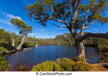 At at Wombat Pool with ancient Pencil Pine trees growing on...