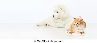 Dog and Cat isolated on white blank background