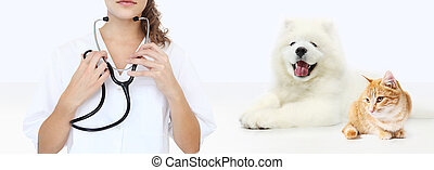 veterinary care concept. veterinarian with stethoscope, dog and cat isolated on white blank background