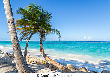 Palm trees Punta Cana Bavaro beach Dominican Republic