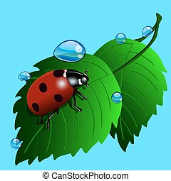 Ladybird on grass with water drops. Illustration on blue.