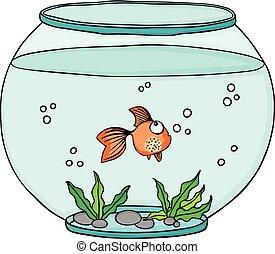 Orange fish in globe aquarium