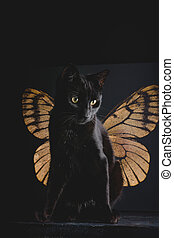 surreal butterfly cat angel