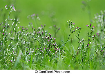Flower grass  with beautiful background texture.