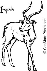 Impala - vector illustration sketch hand drawn with black...