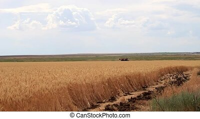 Wheat field and moving crane - The yellow wheat field,...