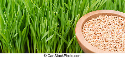 Microgreens Growing Panoramic Wheatgrass Blades Bowl Red...