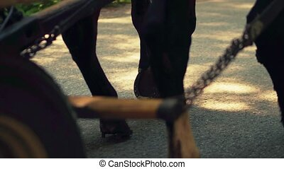 Close-up steadicam shot of horses feet and horse-drawn wagon