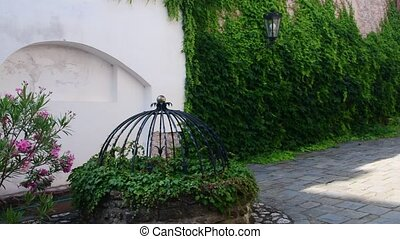 Historic courtyard. Historic house with beautiful flowers and historical water well. Ivy on the wall.