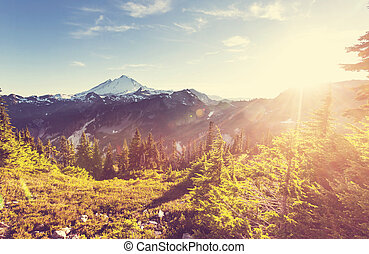 Mt Baker recreational area in summer season