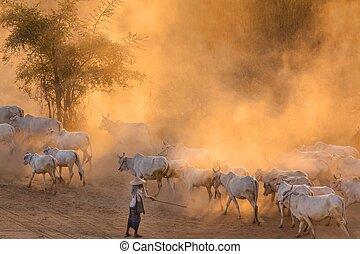 Burmese shepherdess in dust
