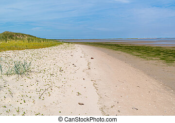 Coastline with sand, grass and mudflat at low tide near...