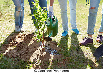 group of volunteers planting and watering tree -...