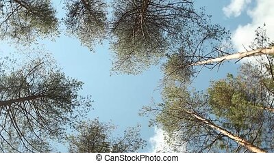 tall trees rotate over head - Dizziness tall trees rotate...