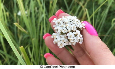 girl touches a beautiful white flower in the grass