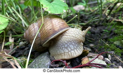 close-up of a snail eats outdoors