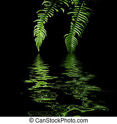 Ferns with water reflection