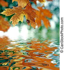 October Atumn Maple Leaf