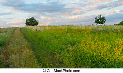 Road in green field at sunset