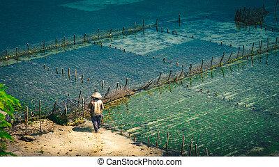 People collect seaweed plantations algal - Nusa Penida,...