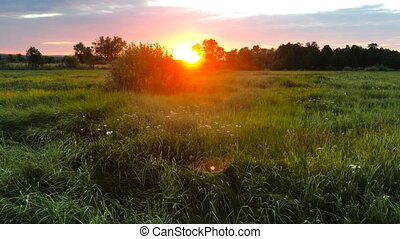summer sunset in the field