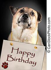 Happy Birthday Dog. - Dog with Happy Birthday sign.