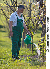 watering orchardgarden - portrait of a senior man gardening...
