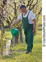 senior man gardening in his garden - watering orchardgarden...