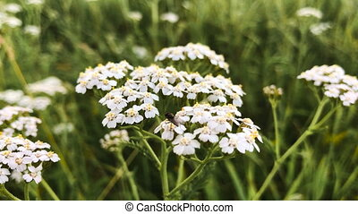 beautiful white flower in the grass