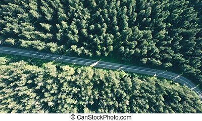 Aerial top down view of a fir tree forest and empty European...