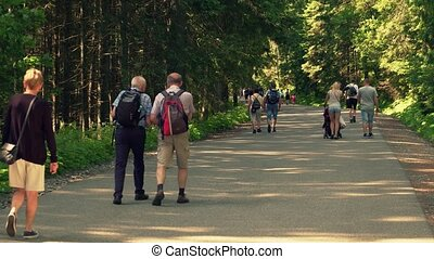 Steadicam shot of people hiking in the forest - Steadicam...