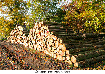 log woodpile in a forest - Forest with chopped tree logs on...