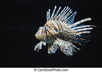 Compelling Brown and White Lionfish With Stripes -...