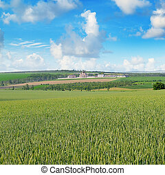 field and orthodox temple against the blue sky - Wheat field...