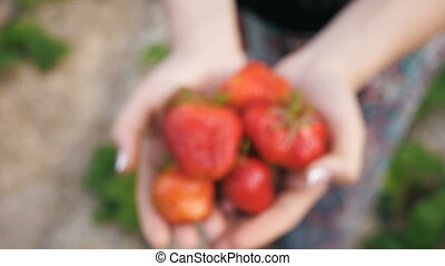 Strawberries in the hands of woman