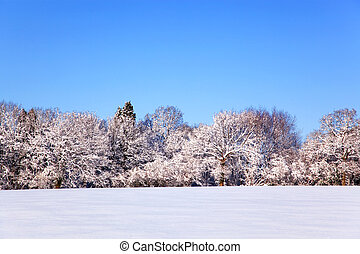 Snow landscape - Landscape photo of a field and trees...