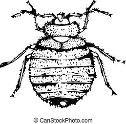 bed bug vector illustration isolated on white silhouette