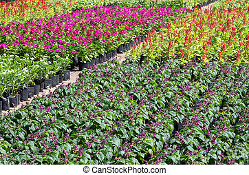 flower garden - Many species of flowers are blooming....