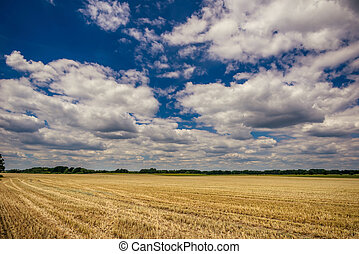 Cloudy blue sky over the field with harvested corn