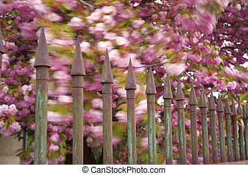 Ukrainian Sakura in the Carpathians - Beautiful flowers of...
