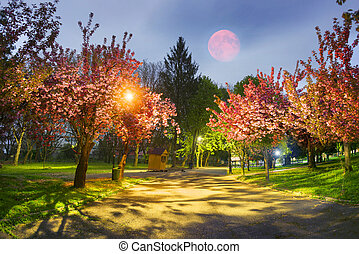 Ukrainian Sakura in the Carpathians - Beautiful flowers of...