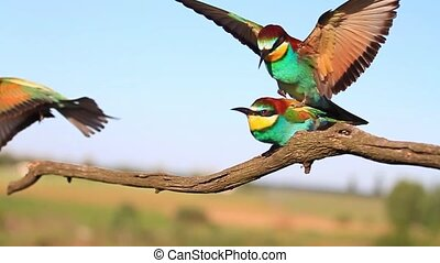 Pairing exotic birds in the spring,wildlife