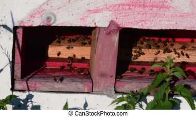 View of rural beehive. Moving bees in front of beehive. Low DOF