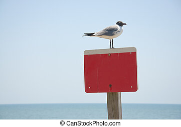 An empty red and white sign with a sea bird sitting on top...
